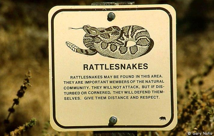 rattlesigncsp
